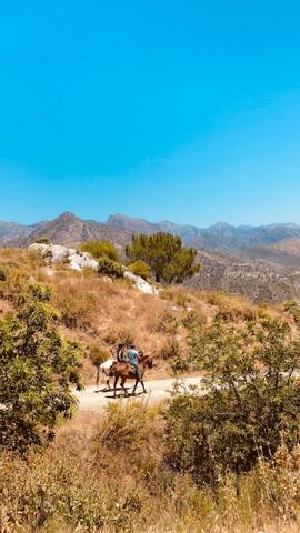 Equestrian riders on a trail